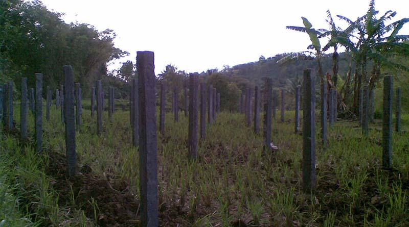 Persiapkan dan Pilih Lokasi Penanaman untuk Tanaman Buah Naga
