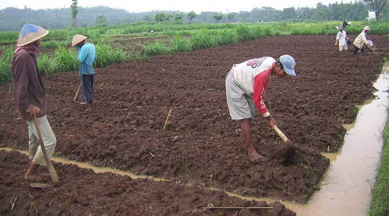 Pengukuran Tingkat Keasaman (pH) Tanah