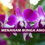 Cara Menanam Bunga Anggrek Yang Benar!
