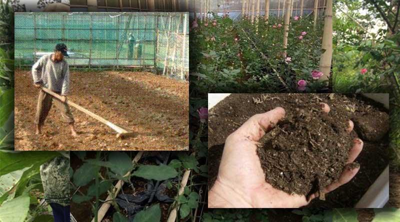 Pengolahan Tanah pada Media Tanam Tanaman Bunga Mawar