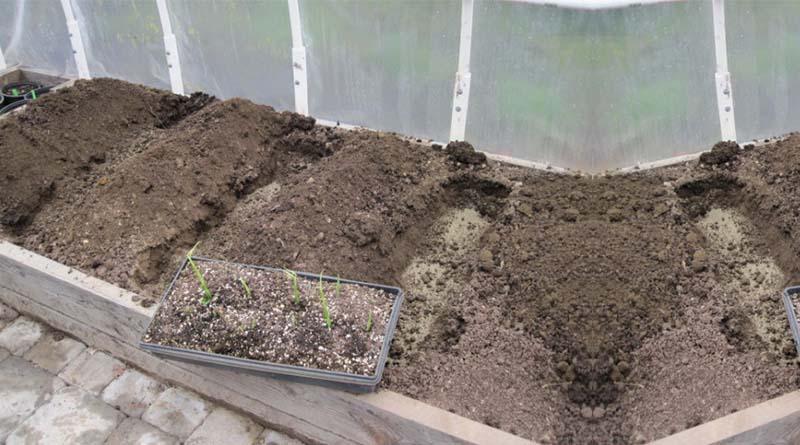 Teknik Bedengan atau Gundukan-Gundukan Tanah