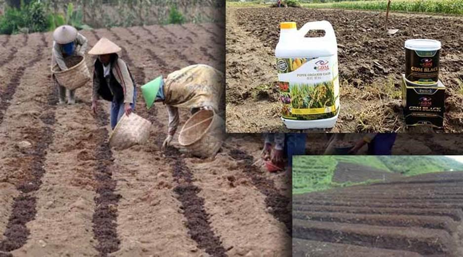 Pengolahan Tanah dan Pemupukan Tanaman Kentang