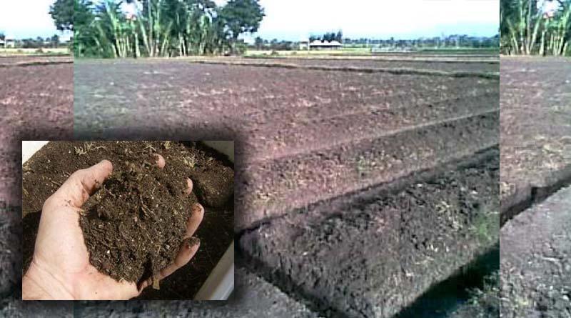 Langkah Ketiga : Persiapan dan Pengolahan Tanah Tanaman Seledri