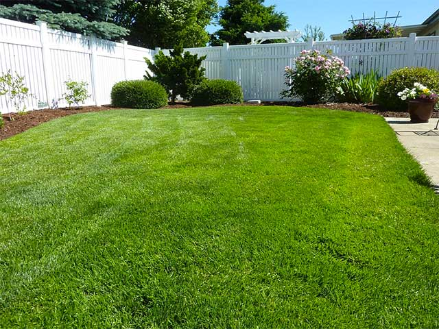 Cara menanam dan perawatan rumput jepang