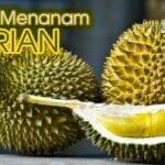 Panduan Lengkap Menanam dan Membudidayakan Durian