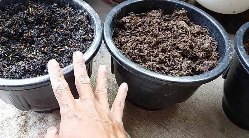 lahan sempit pot