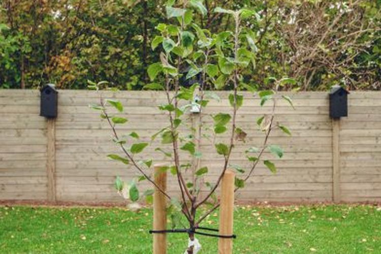 cara menanam pohon