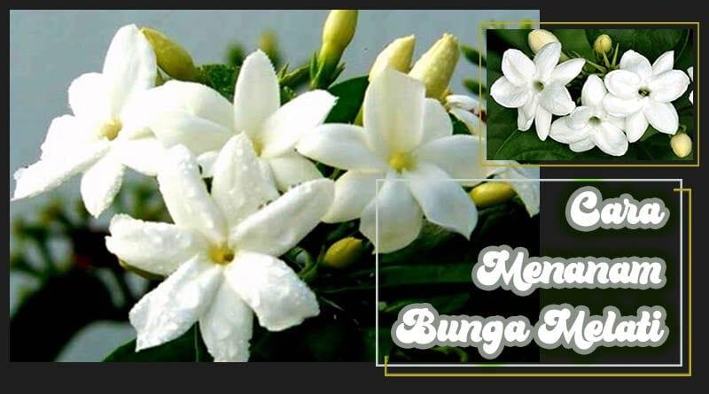 Gambar Kolase Bunga Melati Batik Foto