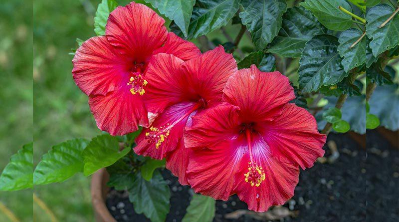 pahami jenis bunga