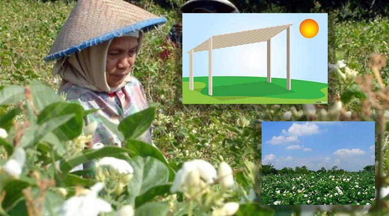 Penentuan Lokasi Tanaman Bunga Melati