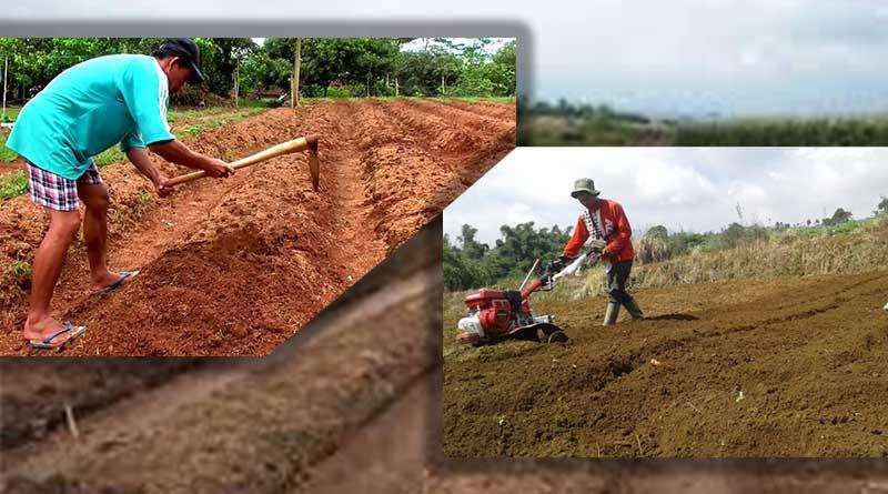 Persiapan pengolahan Tanah Tanaman Bunga Melati