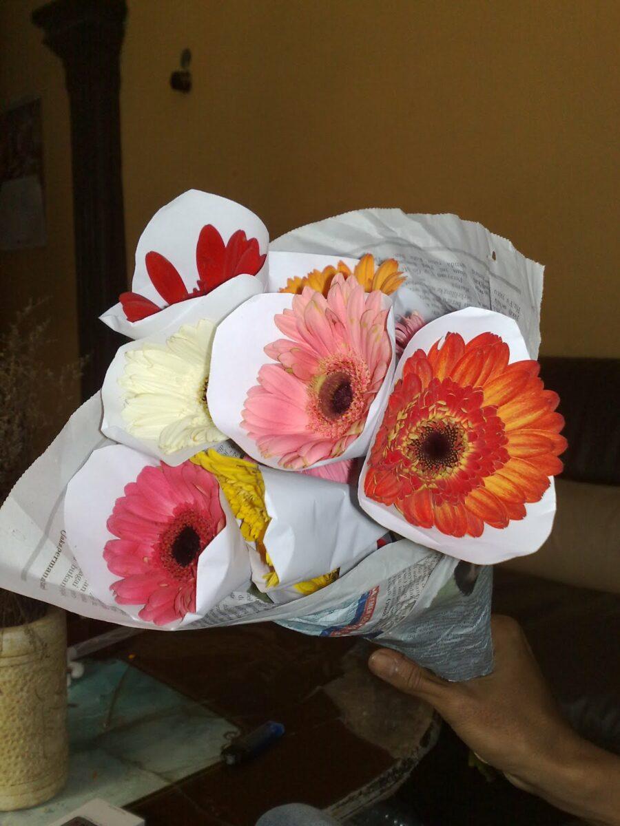 Panen bunga gerbera