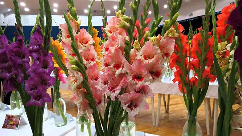 rawat bunga gladiol