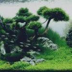 Jenis Tanaman Aquascape yang Mudah Tumbuh