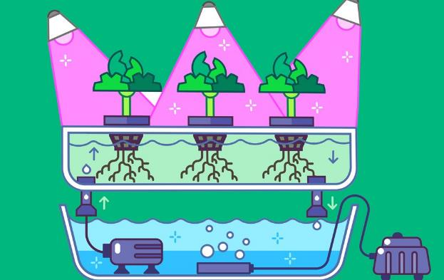 EBB and Flow Hydroponics