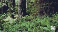 Jenis, Ciri, dan Manfaat Tumbuhan Paku