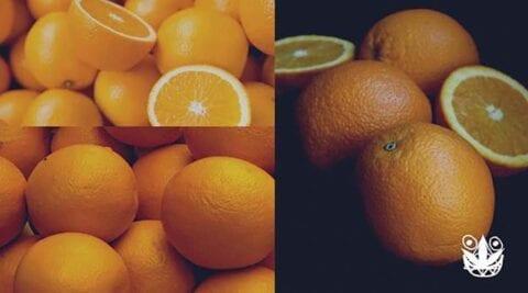 cara menanam jeruk hidroponik