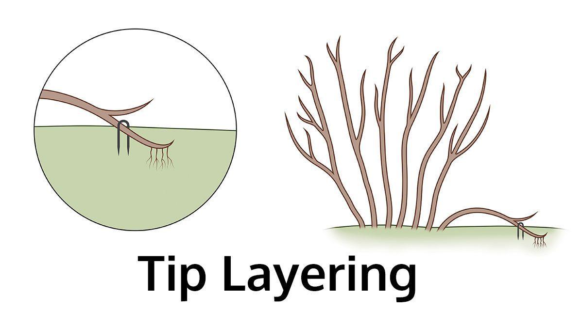 tip layerage