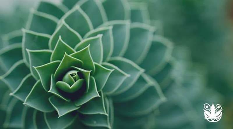 inspirasi tanaman hias di rumah