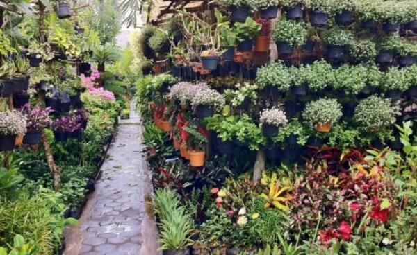 tips bisnis tanaman hias 2