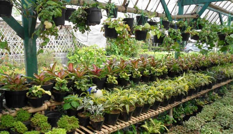 tips bisnis tanaman hias 3
